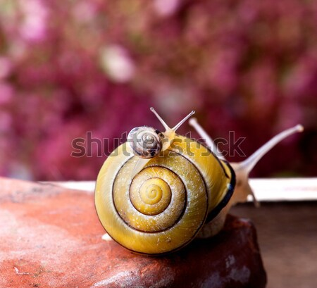 Snails and Pumpkins Stock photo © nailiaschwarz