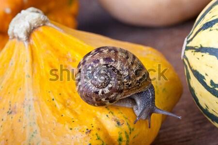 Zucche autunno immagine piccolo giardino fiore Foto d'archivio © nailiaschwarz