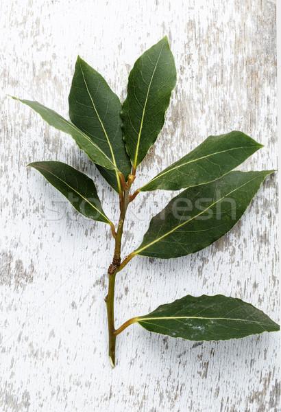 Taze defne dal tablo yaprakları Stok fotoğraf © nailiaschwarz