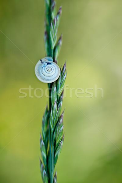 カタツムリ 草 ブレード 春 草原 家 ストックフォト © nailiaschwarz