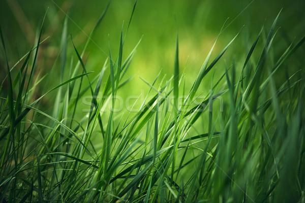 Primavera erba fresche erba verde prato sfondo Foto d'archivio © nailiaschwarz