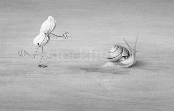 Chasing Snails Stock photo © nailiaschwarz