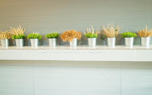 Simplesmente planta balde decorado contrariar estoque Foto stock © nalinratphi
