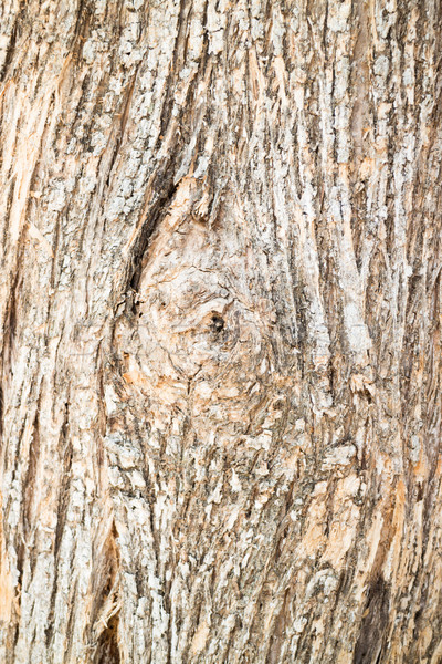 Classic old wooden texture background Stock photo © nalinratphi