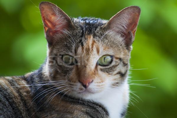 Gatti testa guardando fotocamera verde giovani Foto d'archivio © nalinratphi