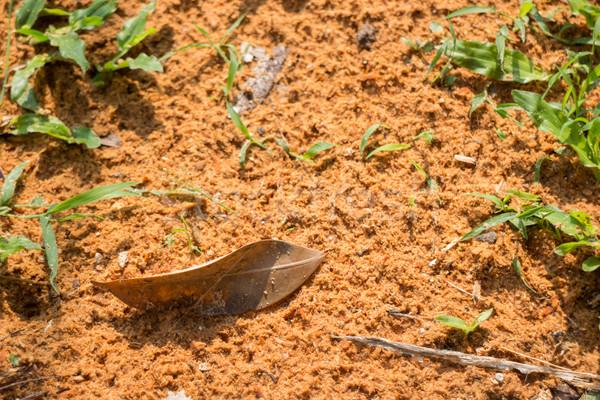 Nature texture of wood sawdust from tree Stock photo © nalinratphi