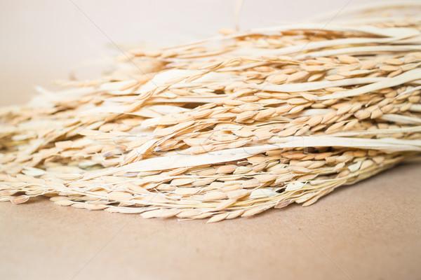 Paddy or rice grain (oryza) on brown background Stock photo © nalinratphi