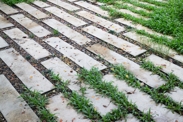 Stock photo: Outdoor cement brick floor in garden