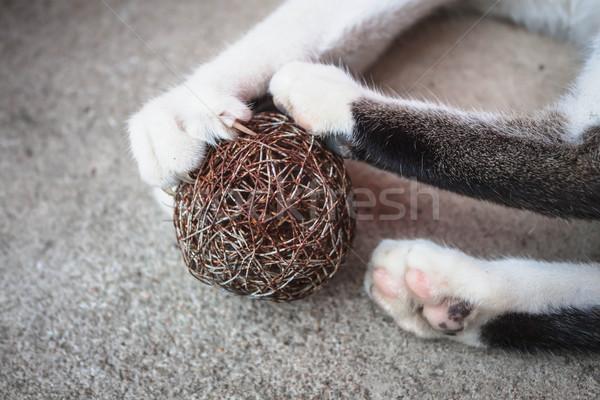 Kat poot uit spelen speelgoed Stockfoto © nalinratphi