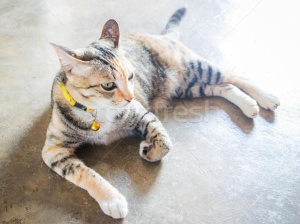 Sziámi macska fekszik szabadidő otthon stock fotó Stock fotó © nalinratphi