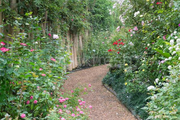 Botânico rosa jardim estoque foto flores Foto stock © nalinratphi