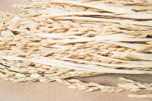Rijst graan bruin voorraad foto schoonheid Stockfoto © nalinratphi