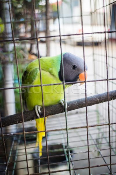 Vert perroquet cage stock photo maison Photo stock © nalinratphi