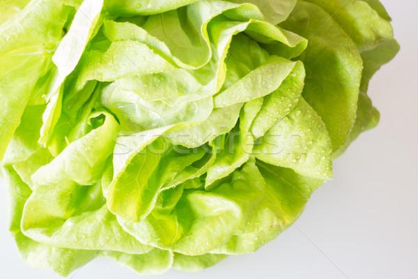 Butterhead hydroponic vegetable up close Stock photo © nalinratphi