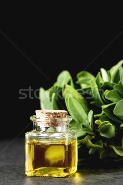 Friss zsálya levelek olasz gyógynövények olaj Stock fotó © Naltik
