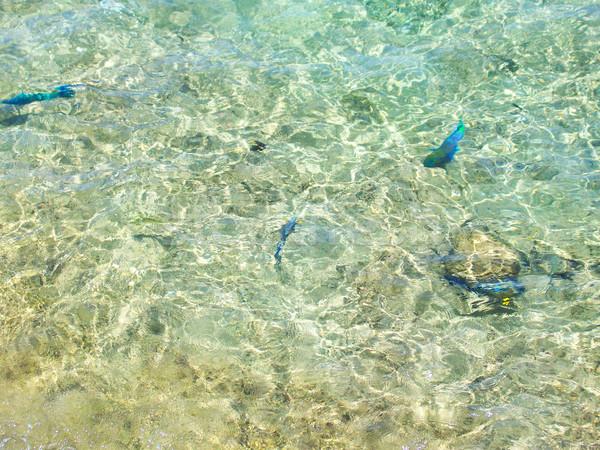 透明な 水 ビーチ 太陽 抽象的な ストックフォト © Natali_Brill