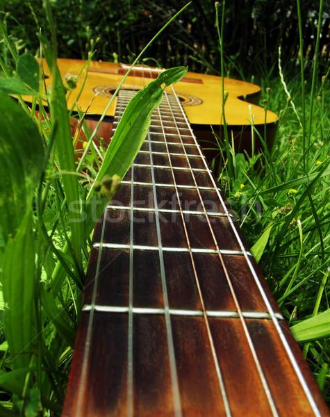 Foto chitarra erba erba verde fiore famiglia Foto d'archivio © Natali_Brill