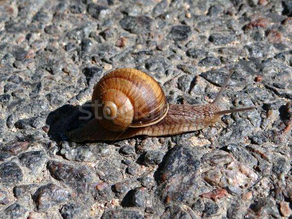 Snail crawling on road Stock photo © Natali_Brill