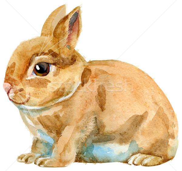 Watercolor illustration of beige rabbit Stock photo © Natalia_1947