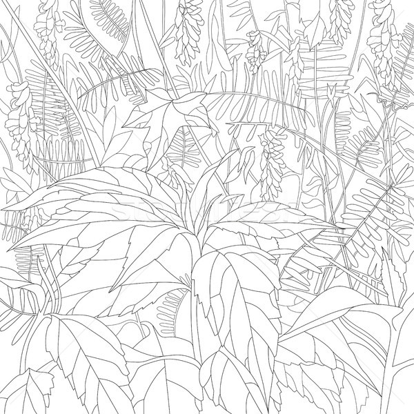 Pattern for coloring book Stock photo © Natalia_1947