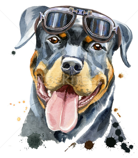 Watercolor portrait of rottweiler Stock photo © Natalia_1947