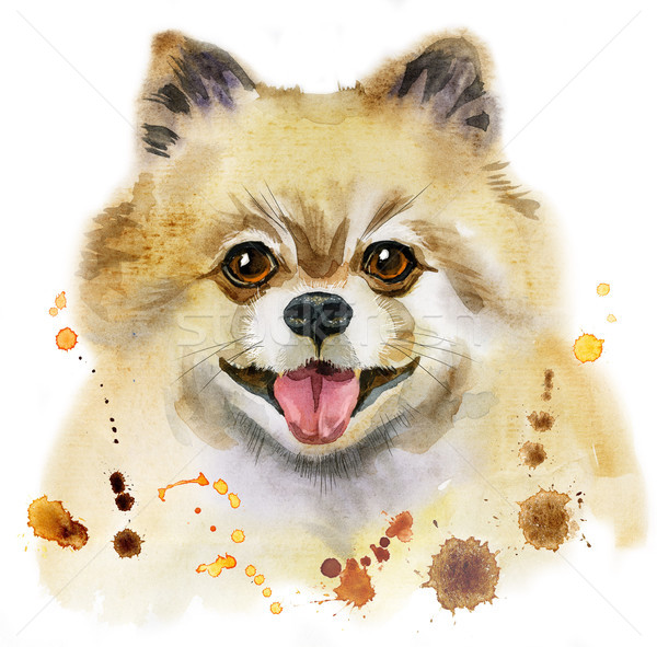 Watercolor portrait of dog pomeranian spitz Stock photo © Natalia_1947