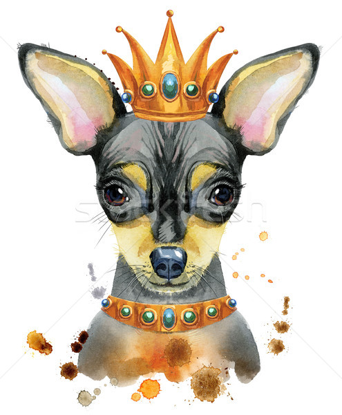 Watercolor portrait of toy terrier with crown on his head Stock photo © Natalia_1947