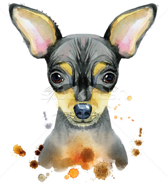 Watercolor portrait of toy terrier Stock photo © Natalia_1947