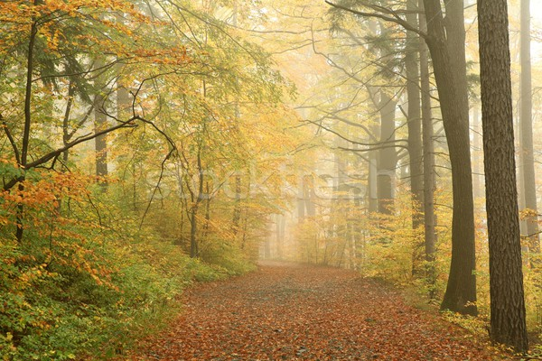 Misty forest path Stock photo © nature78
