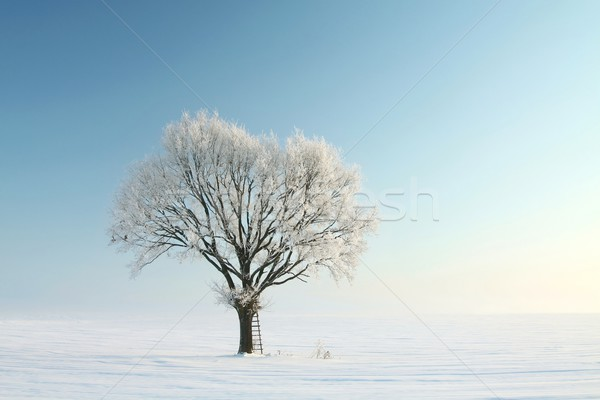 Lonely winter tree Stock photo © nature78