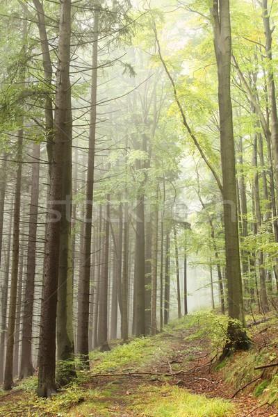 Iz puslu orman dağ sonbahar doğa Stok fotoğraf © nature78