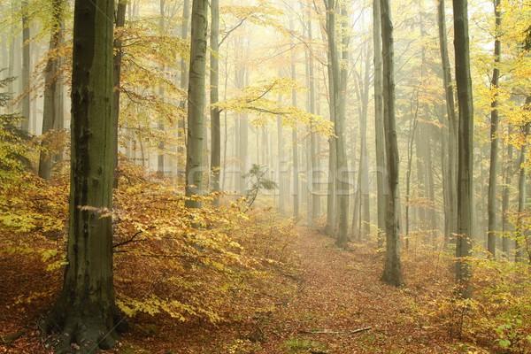осень лес тумана горные склон природы Сток-фото © nature78