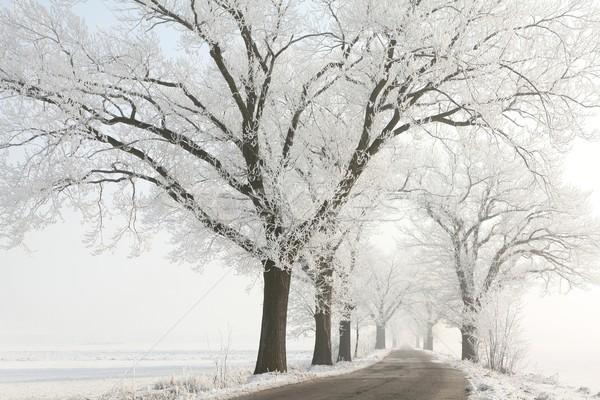 Fák napos tél reggel fedett fagy Stock fotó © nature78