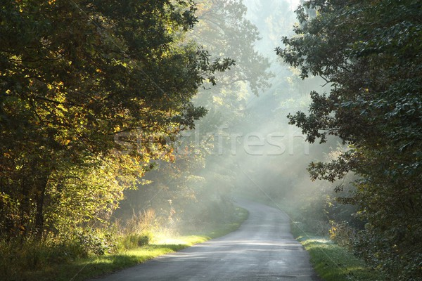 Rural road in autumn forest Stock photo © nature78