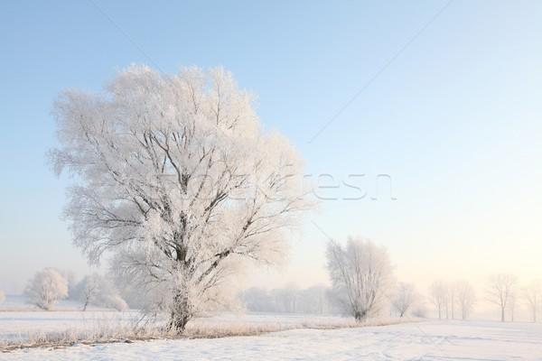 Fagyos tél fa megvilágított emelkedő nap Stock fotó © nature78
