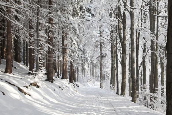 зима лес пути полоса деревья Сток-фото © nature78