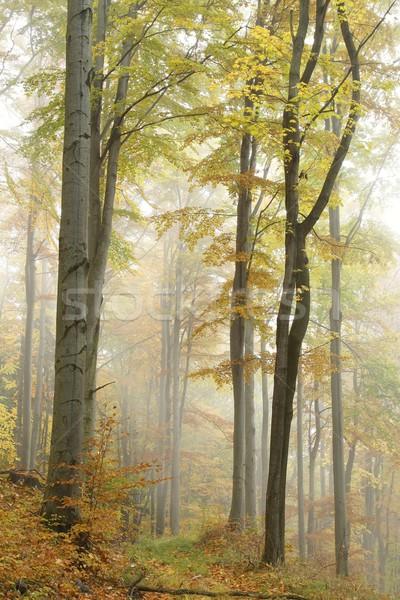 пути туманный лес осень природы резерв Сток-фото © nature78