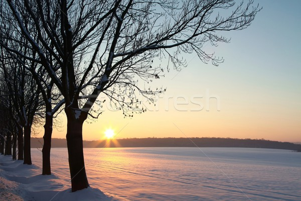 зима пейзаж рассвета закат области деревья Сток-фото © nature78