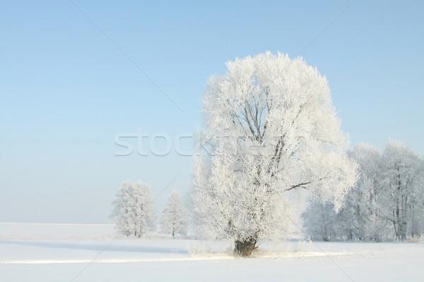 Fagyos tél fa napsütés kék ég természet Stock fotó © nature78