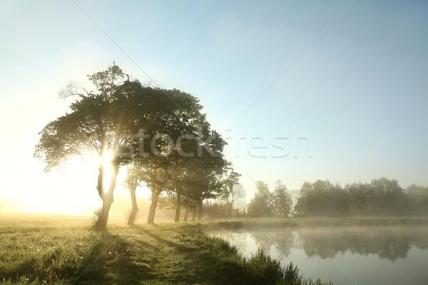 деревья луговой рассвета весны утра край Сток-фото © nature78