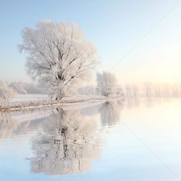 Paysage hiver arbre aube givré Photo stock © nature78