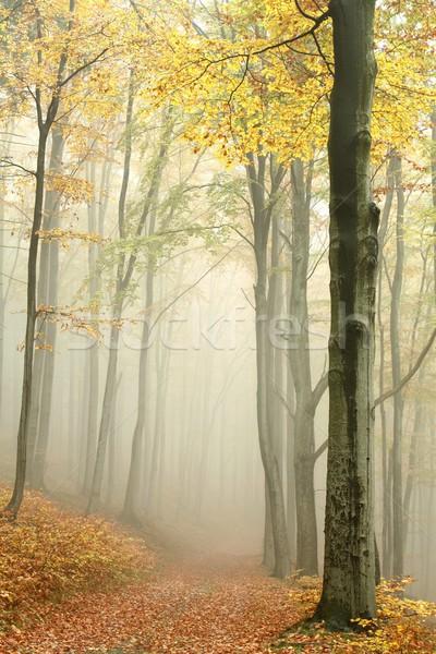 пути туманный осень лес горные тропе Сток-фото © nature78