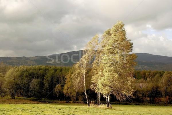 Autumn tree Stock photo © nature78