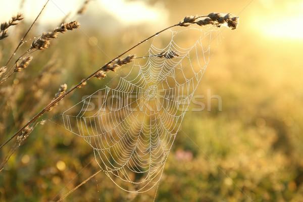 паутина рассвета паутину туманный утра Сток-фото © nature78