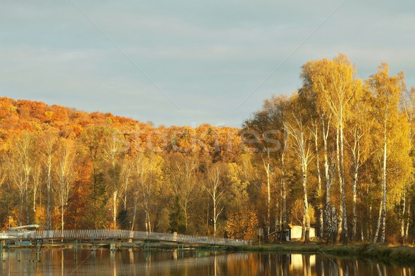 Autumn birches at dawn Stock photo © nature78