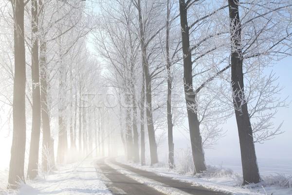 Vidéki út fák tél sáv fedett fagy Stock fotó © nature78