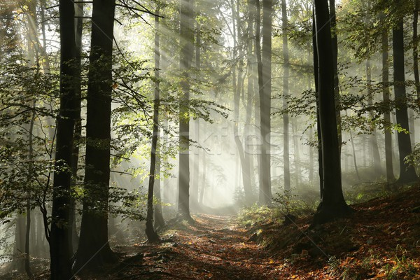 лес пути тумана Sunshine лист Восход Сток-фото © nature78