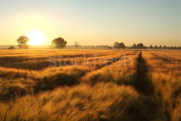 Sunrise over the field Stock photo © nature78