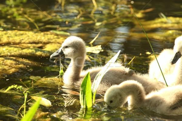 Család fiatal erdő tavacska víz gyermek Stock fotó © nature78
