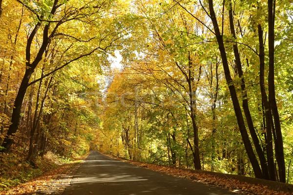 Camino rural otono forestales líder sol Foto stock © nature78